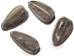 dill pickle jumbo david seeds